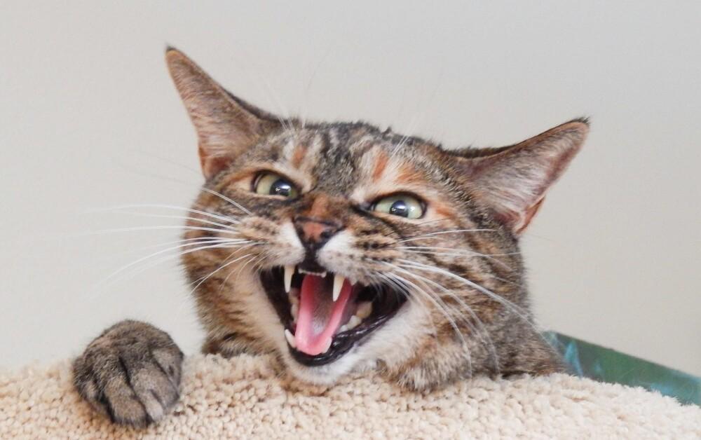Gato oficio de padrino en una boda y se robó todas las miradas