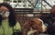 Artistas-perros.PNG