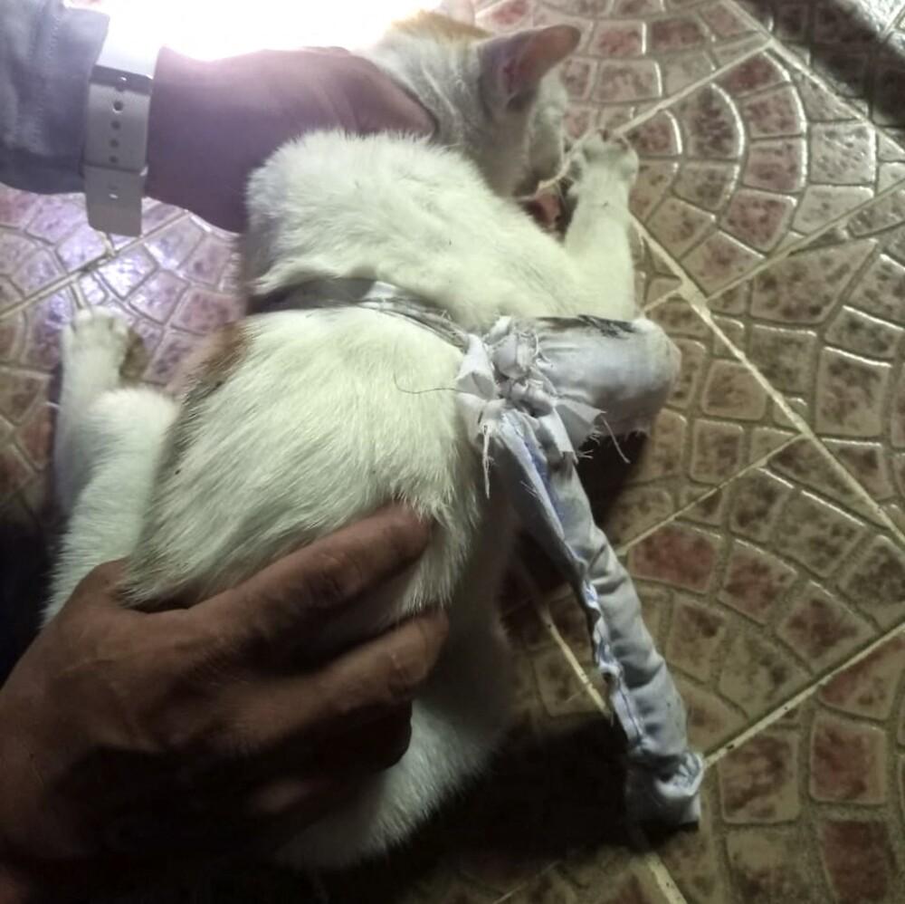 gato con droga en cárcel de Panamá