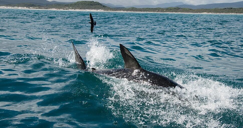 395172_tiburon970.jpg