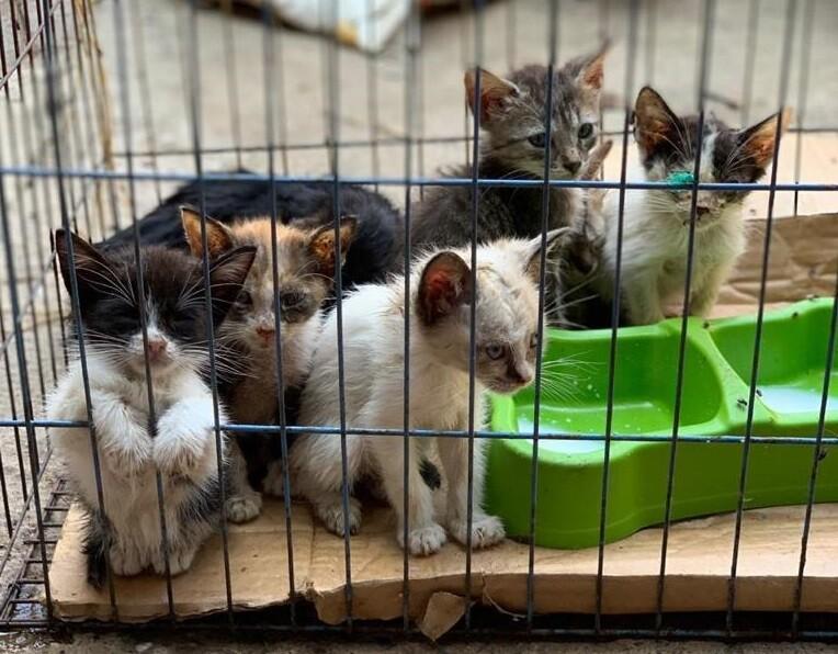 Rescatan animales de un albergue en La Unión, Valle.jpeg
