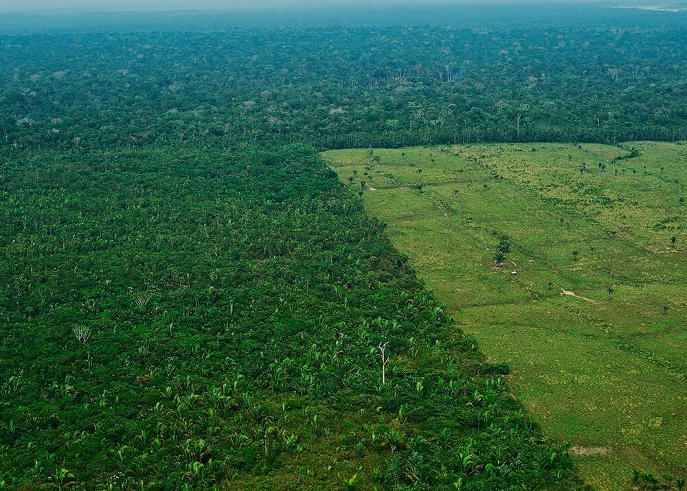 349537_BLU Radio. Deforestación de la Amazonía brasileña // Foto: AFP