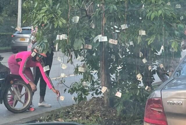 aparece árbol de billetes en Cali