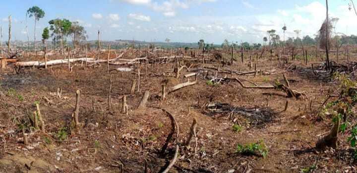 deforestación para siembra de coca en el catatumbo (1).jpeg