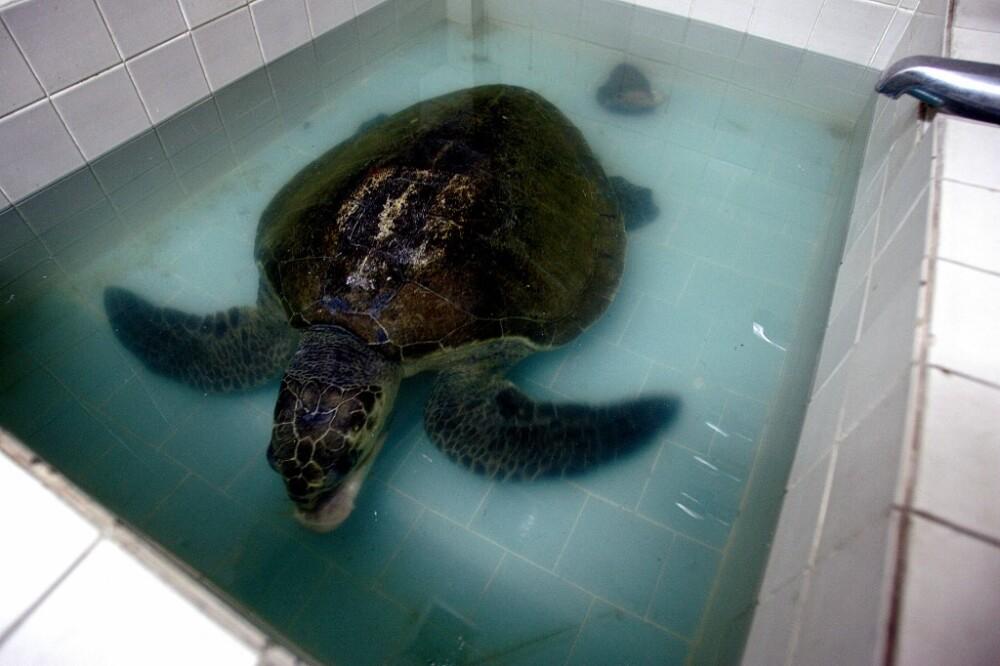 carne de tortuga marina causa muertes en Madagascar