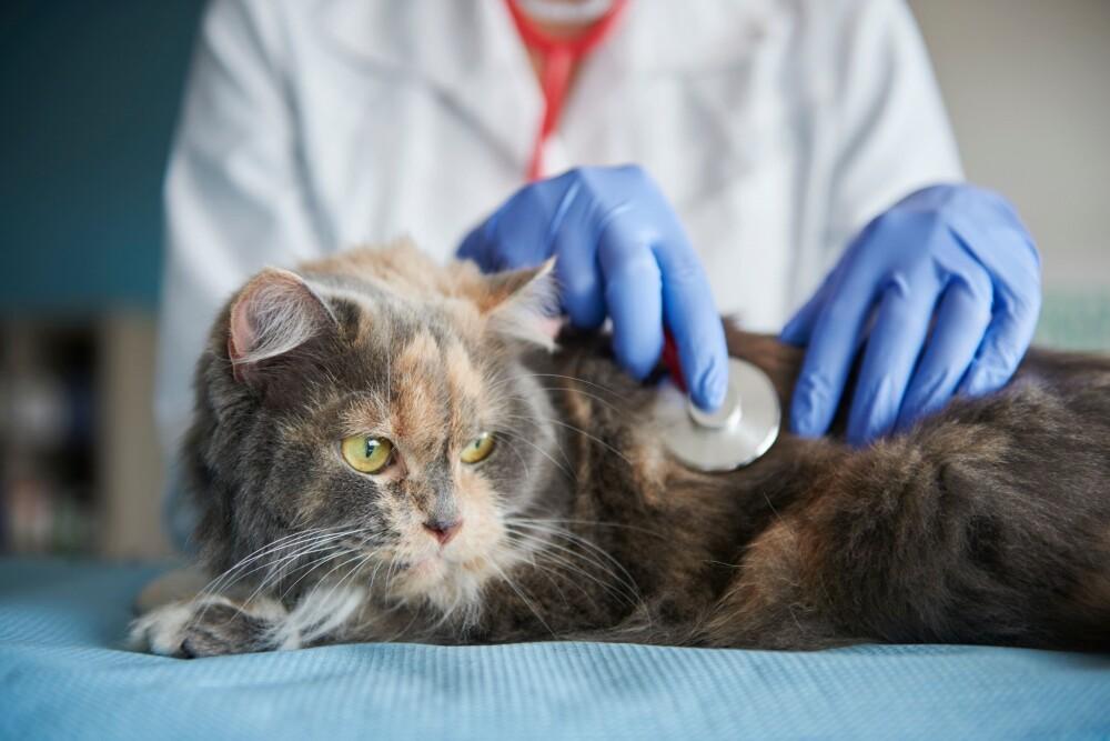 Así podrás identificar si tu mascota tiene una enfermedad neurológica.