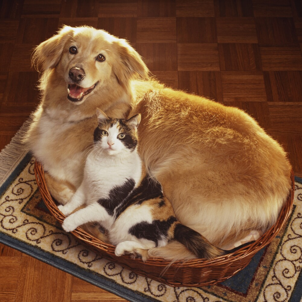 Cat and dog lying side by side in pet bed, elevated view