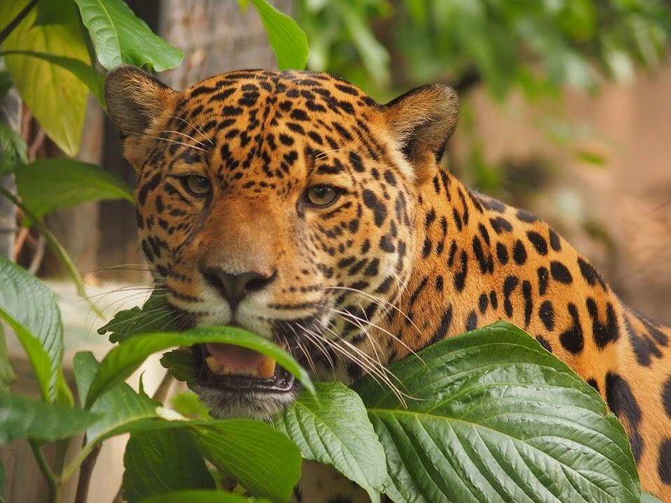 Animales zoológico Santa Fe.JPG