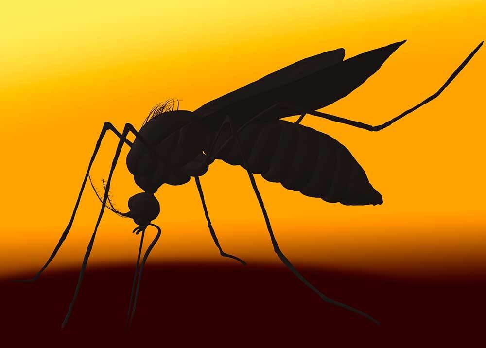 326910_BLU Radio, Dengue / Foto: BSIP