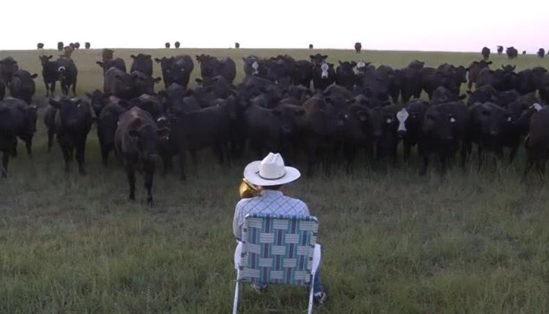 Concierto a vacas
