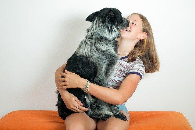 Conozca cómo alimentar bien a su perro