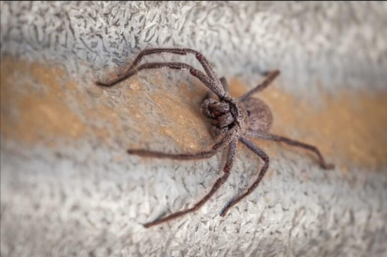 madre graba invasión de arañas.jpg