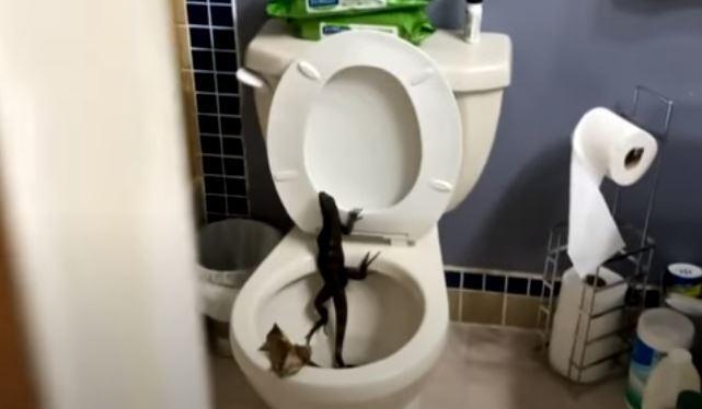 iguana en baño