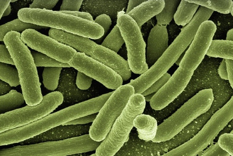 Niño murió tras infectarse con una ameba comecerebros